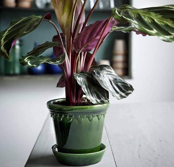 Bilde av grøn glasert 10 cm